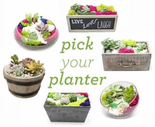 10006418 pick your own planter with premium succulents